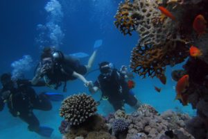Great Barrier Reef Divers